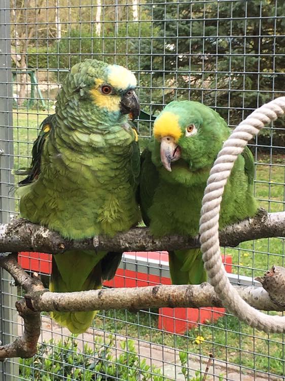papageien partnervermittlung)